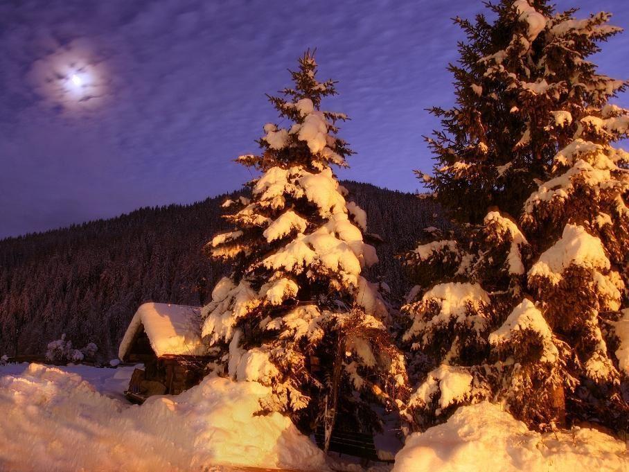 Fiaccolata al chiaro di luna - Il giardino al chiaro di luna ...
