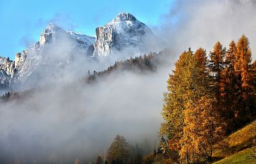 foliage-sella
