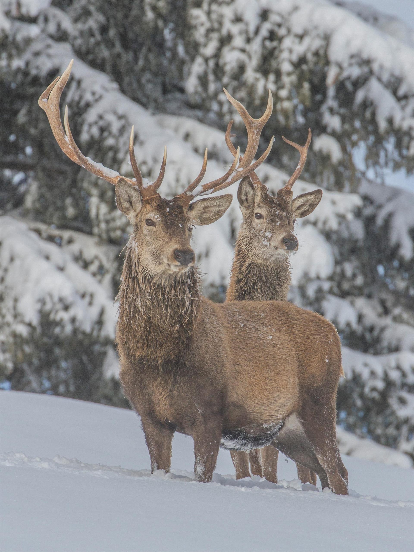 Deer Park Sompunt
